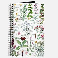 Larousse Plantes digestives, stimulantes Journal