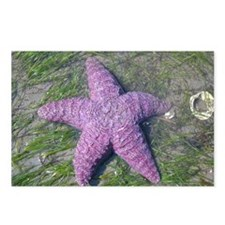 Unique Starfish Postcards (Package of 8)
