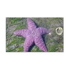 Cute Beach fish Rectangle Car Magnet