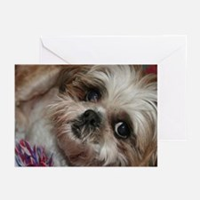 Head Shots (Brandy) Greeting Cards (Pk of 10)