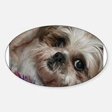 Head Shots (Brandy) Oval Decal