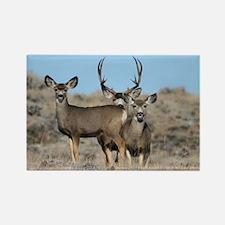 Deer family Rectangle Magnet