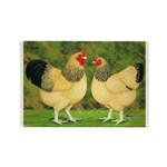 Wyandotte Rooster and Hen Rectangle Magnet