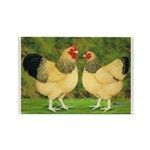 Wyandotte Rooster and Hen Rectangle Magnet (10 pac