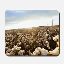Bright, White Cotton Field Mousepad