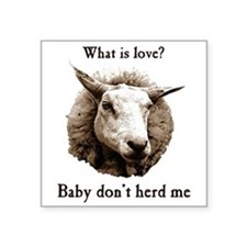 Baby Don't Herd Me Sheep Sticker