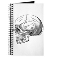 Anatomical Journal