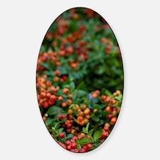Green & berry wreathssau. Open-air  Decal