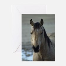 Unique Bucking horse Greeting Cards (Pk of 10)