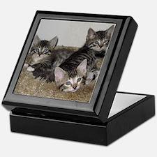 Cute Kittens Keepsake Box