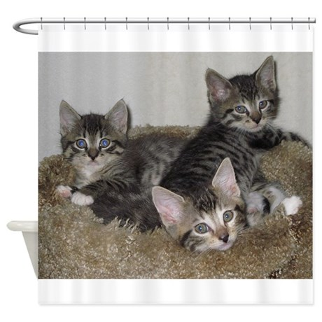 Cute Kittens Shower Curtain By Expressivemind