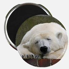 Polar bear 003 Magnets