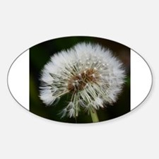 Dandelion Decal
