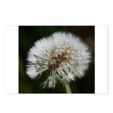 Unique Dandelion seeds blowing in the wind Postcards (Package of 8)