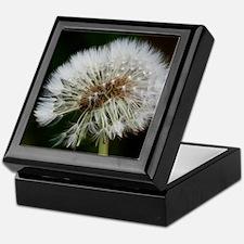 Unique Beautiful dewsdrops on dandelion macro photograph Keepsake Box