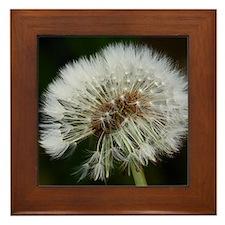 Cute Blowing dandelion Framed Tile