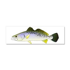 Spotted Seatrout 2 Car Magnet 10 x 3