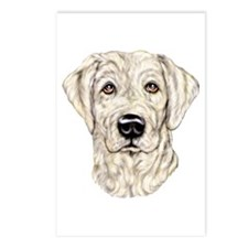 Yellow Lab Bust Postcards (Package of 8)