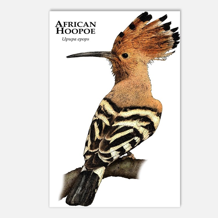 African Hoopoe Postcards (Package of 8)