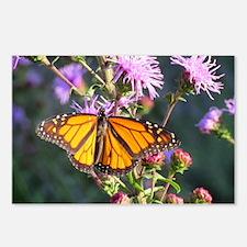 Monarch Butterfly on Purple Milkweed Postcards (Pa