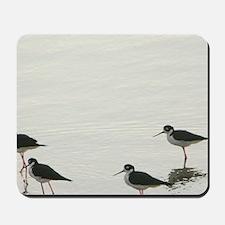 Bonaire. Shore birds on Gotomeer Lakeire Mousepad