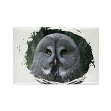 Great grey owl 001 Magnets