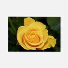 Rose yellow 001 Magnets