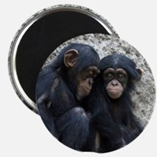 Chimpanzee002 Magnets