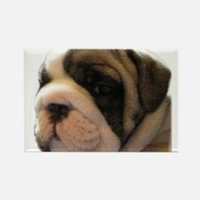 Cute Minature english bulldog pictures Rectangle Magnet