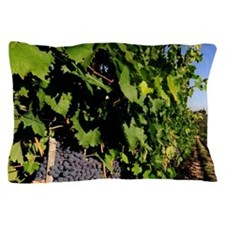 Greve. Chianti grapes from the vineyar Pillow Case