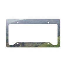 Italy, Tuscany, Lucca Vineyar License Plate Holder