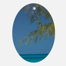 Solitary Beachgoer CAICOS, Salt Cay  Oval Ornament