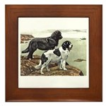 Newfoundland Dog Framed Tile