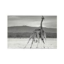 Necking Giraffes Rectangle Magnet