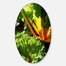 Swiss Chard Sticker (Oval)
