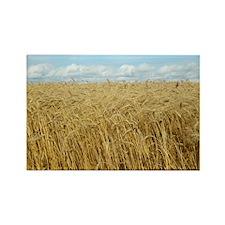Cute Wheat fields Rectangle Magnet