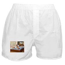 Dachshunds Sleep In Boxer Shorts