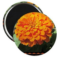 "Orange Zinnia Quote 2.25"" Magnet (100 pack)"