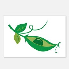 Pea In A Pod Postcards (Package of 8)