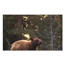 Bear Rectangle Decal