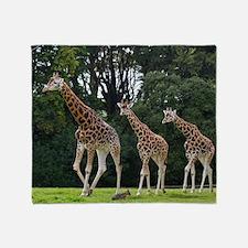 Giraffes family in the wildlife park Throw Blanket