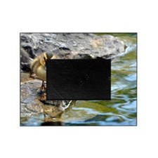 Inquisitive Duck Picture Frame