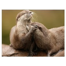 Oriental Short-Clawed Otters Canvas Art