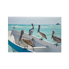 Pelicans At Playa Del Carmen, Mex Rectangle Magnet
