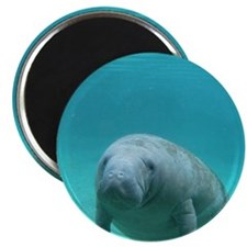 Seacow or Manatee Swimming Undereater in Cr Magnet