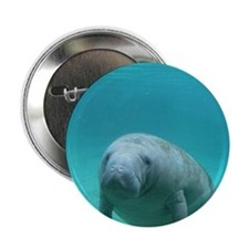"Seacow or Manatee Swimming Undereater 2.25"" Button"