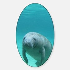 Seacow or Manatee Swimming Undereat Sticker (Oval)
