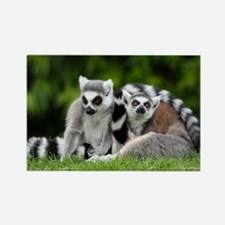 two ring tailed lemurs Rectangle Magnet
