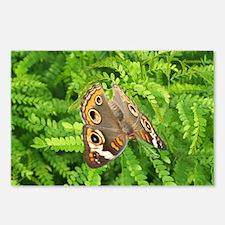 ButterflyFern Postcards (Package of 8)