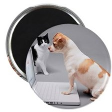 Chihuahua on laptop with cat watching Magnets